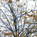 10972   Start of winter