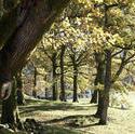 9973   Woodland landscape