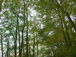 8564   woodland trees