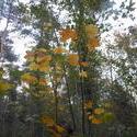 12424   autumn colours 0