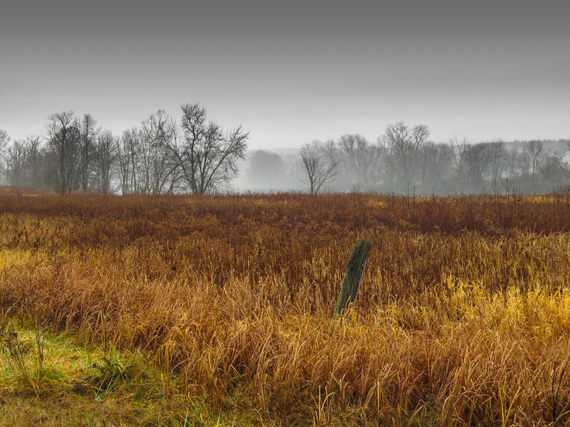 <p>Autumn grasses on a rainy day contrasting the overcast sky on the horizon.</p>