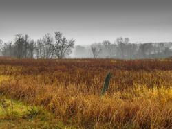 12030   autumn grasses