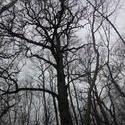12428   backlit tree 2