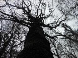 12429   backlit tree 3