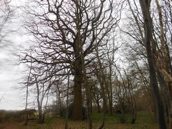 12430   backlit tree 4