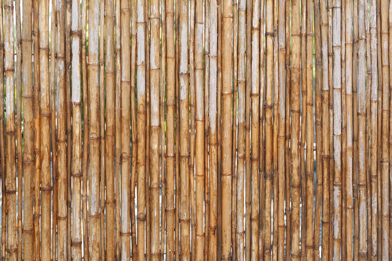 Various thick vertical old yellow bamboo poles as fence or background with copy space