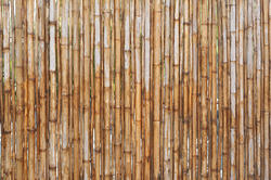12679   Vertical bamboo poles as fence or background