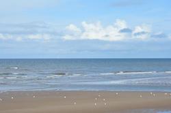 15565   Sandy Beach