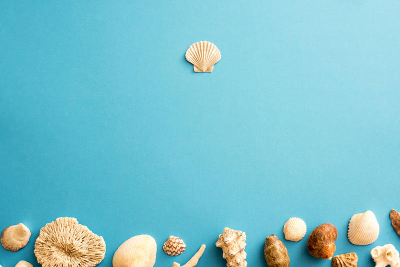 13094   Blue seashell border with copy space
