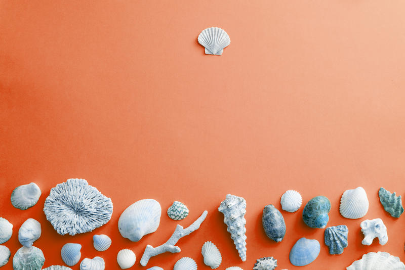 Blue seashell border on orange with copy space with assorted tropical oceanic shells and coral conceptual of summer holidays, nautical and marine themes