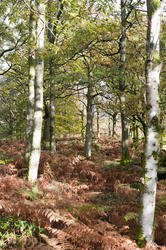 11854   Autumnal forest in daylight