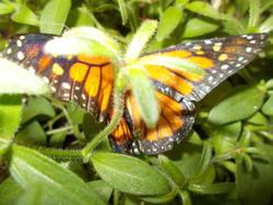 17200   butterfly exhibit