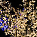 16802   christmas lights 2free