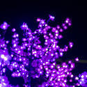 16800   Pink Christmas lights