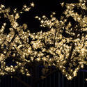 16801   Gold Christmas lights