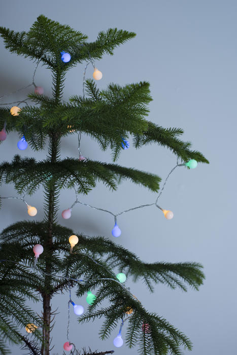Natural pine Christmas tree with simple colored lights for decoration over a grey background