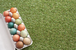 13471   Easter eggs on grass