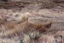 11856   Dry Grasslands
