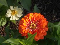 17029   An Orange Zina