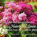 16908   El Huerto del Senor