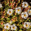 16835   Flowers