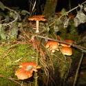 12500   forest mushroom 18