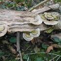 12489   forest mushroom 6