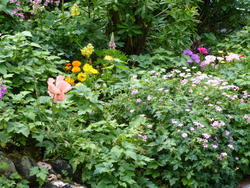 12930   Flowerbed with assorted flowers in a summer garden