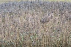 16783   Long grasses