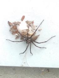 16767   house spider