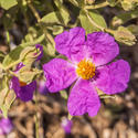 16827   Flower