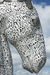 12856   Close up profile of a Kelpie horse head