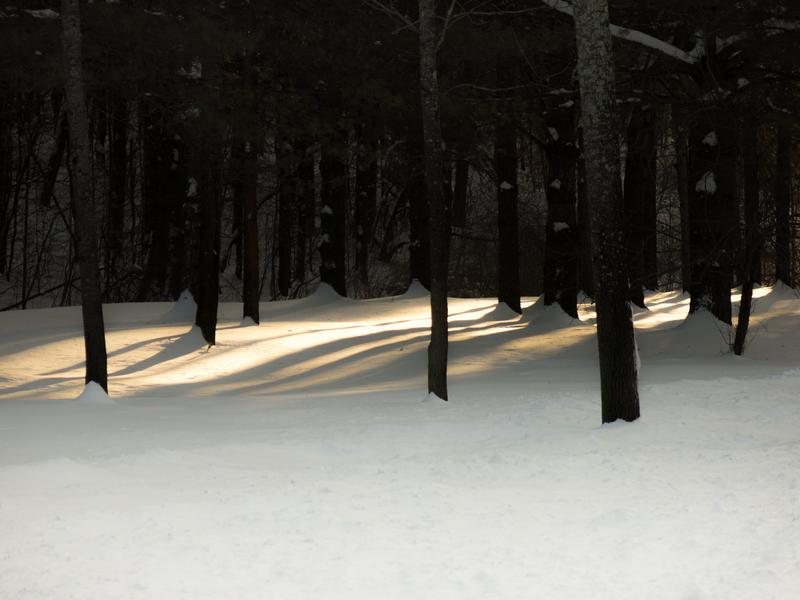 <p>Light filtering through the young trees after a fresh fallen snow in the morning in rural Vermont.</p>