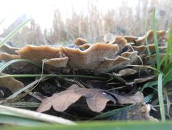 12535   mushrooms