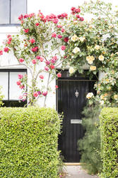 12910   Arch of climbing roses over a doorway