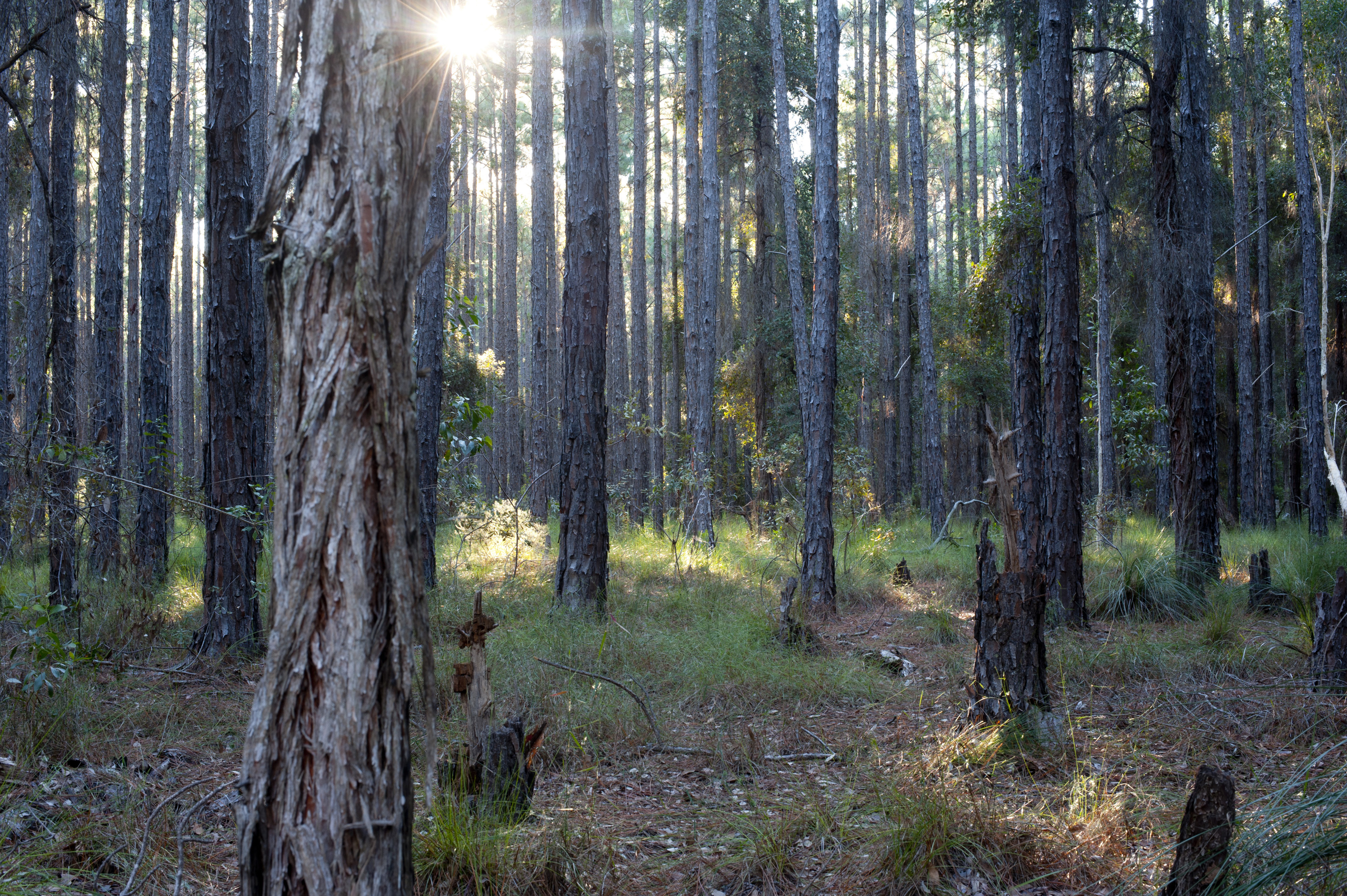 free stock photo 11869 landscape of forest in sunlight