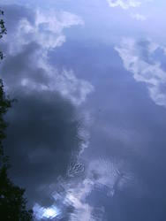 16379   pond ripples