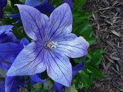 17134   A closeup of a purple flower
