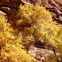16120   Red Rocks Park Autumn Colors
