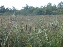 12548   reeds in norfolk
