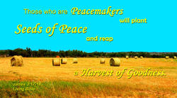 12696   Seeds of Peace