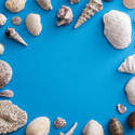 stock image 13108   Ocean themed background surrounded by shells