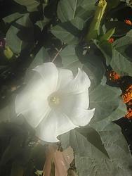 16993   soft focus white flower
