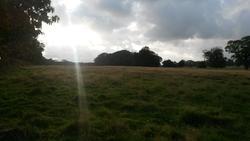 12554   sun on the fields
