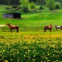 12117   three horses