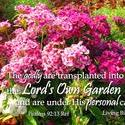 16909   Transplanted in God's Own Garden