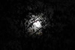 13065   tree infront of moon