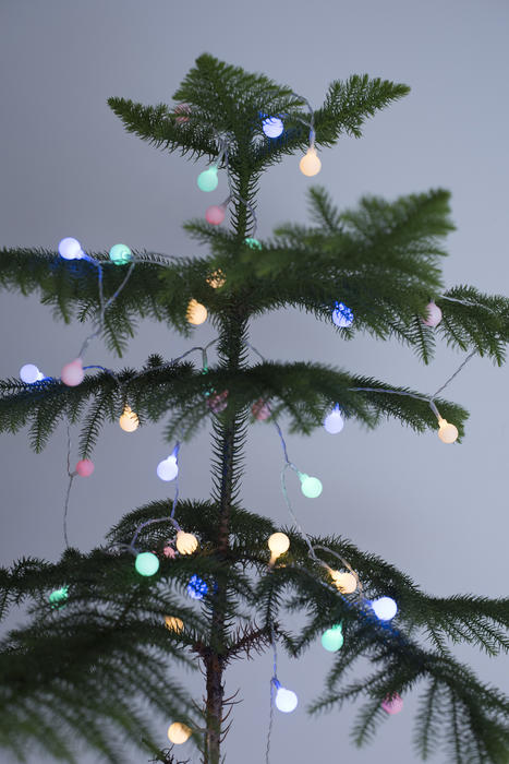 Sparkling round colorful Christmas lights on a natural green pine tree over a grey background for a simple festive celebration
