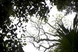 11870   Tree trunks from below