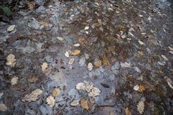 11871   Wet leaves